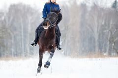 Bay horse with rider galloping on winter field Royalty Free Stock Photos
