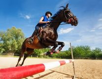 Bay horse with female rider jumping over a hurdle Stock Images