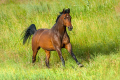Bay horse in field Stock Photos