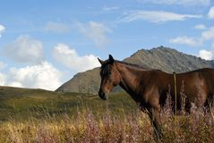 horse on free grazing in the autumn mountains Royalty Free Stock Photo