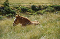 Bay horse grazes on meadow in mountain valley in Pyrenees near C Stock Image