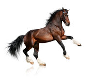 Bay horse isolated Stock Photo
