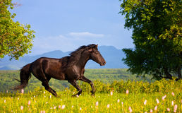 Bay horse Royalty Free Stock Image
