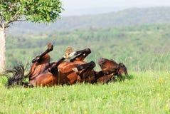 Bay horse Royalty Free Stock Photo