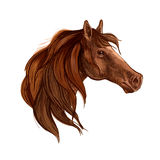 Bay horse with long mane portrait. Bay horse with long mane vector portrait. Brown stallion mustang head wth gazing glance Stock Photography