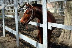Horse looks out of fence Royalty Free Stock Photos