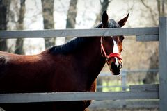 Horse looks out of fence Stock Photography