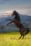 Bay horse in mountain Royalty Free Stock Photography