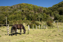 Bay horse in nature Royalty Free Stock Image