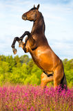 Bay horse rearing up on floral background Stock Photo