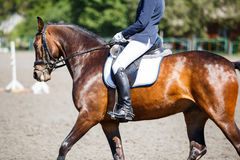 Bay horse with rider at dressage competitions. Close up image of horse with rider at dressage equestrian sports competitions. Details of equestrian equipment Royalty Free Stock Images