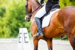 Bay horse with rider at dressage competitions Royalty Free Stock Photo