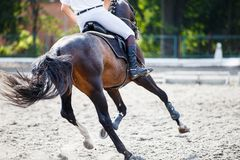 Bay horse with rider on show jumping competition. Stock Image
