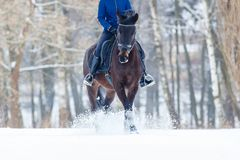 Bay horse with rider galloping on winter field Stock Image