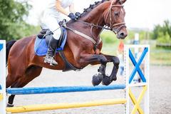 Bay horse with rider jumping over obstacle. On show jumping competition Stock Photography