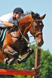 Bay horse and rider over a jump Stock Photos