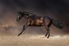 Bay horse run Royalty Free Stock Photos