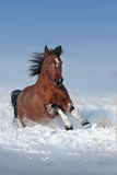 Bay horse in snow Royalty Free Stock Photography