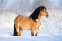 Bay horse in snow meadow Royalty Free Stock Photos