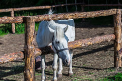 Bay Horse Standing at wooden fence in pasture Stock Photos