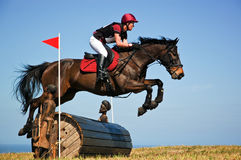 Bay horse stretching over a barrel jump at horse show Royalty Free Stock Images