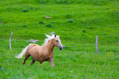 Bay horse Royalty Free Stock Photo