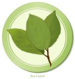 bay icon leaves royaltyfri illustrationer