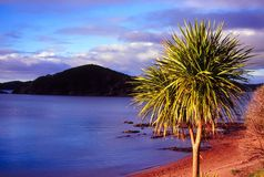 Bay of Islands - New Zealand. Evening light over the Bay of Islands in northern New Zealand Stock Image