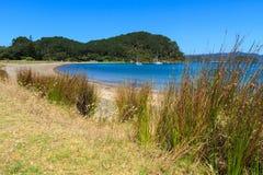 Bay of Islands, New Zealand. Beach on Motuarohia Island royalty free stock photography