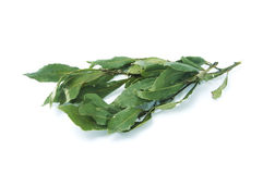 Bay laurel. Leaves isolated on a white background stock photography