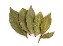 Bay laurel leaves on white Royalty Free Stock Photos