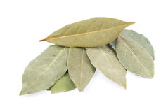 Bay leaf. Bay leaves on white background Stock Images