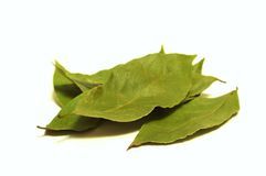 Bay leaf. Photo of the bay leaf on white background stock image