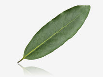 Bay leaf Stock Photos