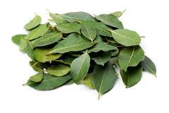 Free Bay Leaf Stock Image - 18358861