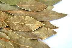 Bay leaf Royalty Free Stock Photos