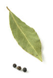 Bay leaf. Isolated on white with pepper corns at the bottom, only the leaf is in focus Stock Photography