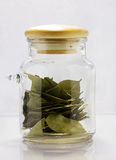 Bay leaf. A glass jar with a bay leaf Stock Image