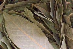Bay leaf Royalty Free Stock Photos