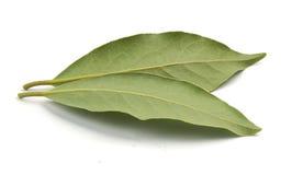 Bay leaf Stock Image