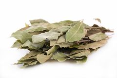 Free Bay Leaf Royalty Free Stock Photography - 37730977