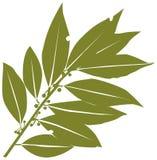 Bay-leaf. Laurel graphics vector illustration