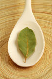 Bay leaf. On a wooden spoon stock photos