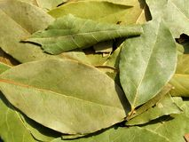 Bay leaf background Royalty Free Stock Photography