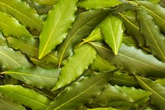 Bay leaf in the background Royalty Free Stock Photos