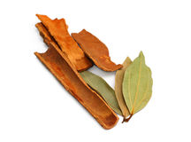 Bay leaf with Cinnamon royalty free stock image