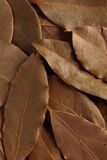 Bay leaf, dried herb. Texture of dried bay leaves herb. close up the tree leaf's line Stock Images