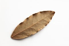 Bay leaf, dried herb. Isolated dried bay leaf on a white background Royalty Free Stock Image