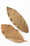 Bay leaf, dried herb. Two dried bay leaves isolated on a white background Stock Photography