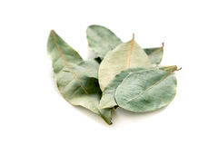 Bay leaf. Royalty Free Stock Photos